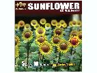 35001 Sunflowers